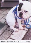 癒やされない犬のほん