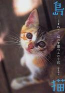 オンライン書店ビーケーワン:島猫