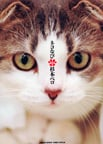 オンライン書店ビーケーワン:ネコなび 1