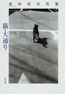 オンライン書店ビーケーワン:猫・大通り