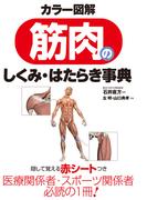 【期間限定価格】カラー図解 筋肉のしくみ・はたらき事典