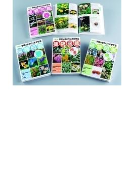 学校のまわりでさがせる植物図鑑 4巻セット