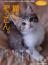 猫にぞっこん。 有名無名のイチオシ猫たちが続々と登場!(マガジンハウスムック)
