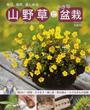 山野草と小さな盆栽