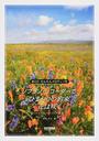 ソプラノ・リコーダーで「ひまわりの約束」「花は咲く」