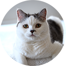 猫好き建築士編集者