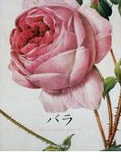 バラ (ジャンボシリーズ)