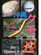 沖縄クモ図鑑 めずらしい沖縄のクモ217種!