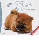 駆けっこしよう柴犬 (ヤマケイ・パピーブックス)