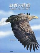 原野の鷲鷹 北海道・サロベツに舞う