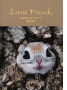 風の友だちモモンガ (Little Friends)
