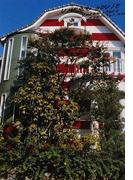 UMEZZ HOUSE