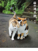 猫の通り路