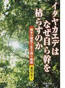イタヤカエデはなぜ自ら幹を枯らすのか 樹木の個性と生き残り戦略