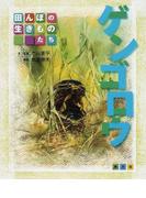 ゲンゴロウ (田んぼの生きものたち)