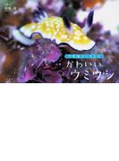 かわいいウミウシ (不思議ないきもの)