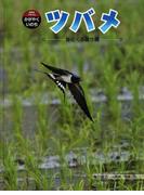 ツバメ 春にくる渡り鳥 (科学のアルバム・かがやくいのち)