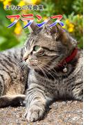 まちねこ写真集・フランス(ニャンと猫ねこ)