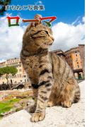 まちねこ写真集・ローマ(ニャンと猫ねこ)