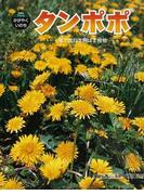 タンポポ 風でたねを飛ばす植物 (科学のアルバム・かがやくいのち)