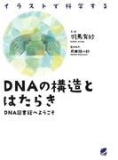 DNAの構造とはたらき : DNA図書館へようこそ イラストで科学する(BERET SCIENCE)