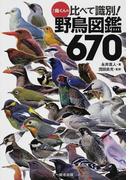 鳥くんの比べて識別!野鳥図鑑670
