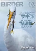 BIRDER2015年3月号
