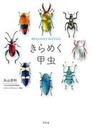 きらめく甲虫(幻冬舎単行本)