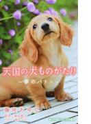 天国の犬ものがたり 夢のバトン (小学館ジュニア文庫)(小学館ジュニア文庫)