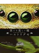 世にも美しい瞳ハエトリグモ