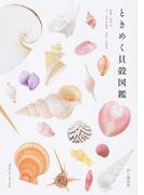 ときめく貝殻図鑑 (Book for discovery)