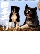 岩合光昭 2017カレンダー 日本犬 (カレンダー)