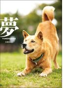 夢-YUMENOSUKE-