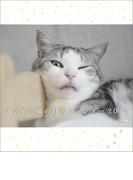 卓上 ツンギレ猫の日常 週めくり (2017年版カレンダー)