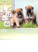 しばいぬCALENDAR 2017