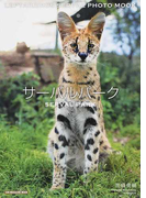 サーバルパーク LEPTAILURUS SERVAL PHOTO MOOK