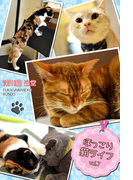 ほっこり猫ライフ vol.7