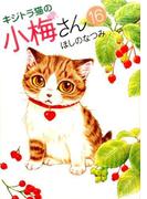 キジトラ猫の小梅さん 16 (コミック)