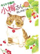 キジトラ猫の小梅さん(16)
