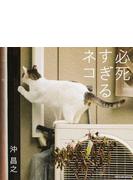 写真集 必死すぎるネコ