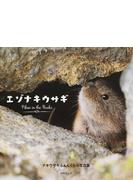 エゾナキウサギ Pikas in the Rocks ナキウサギふぁんくらぶ写真集