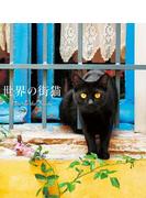 世界の街猫