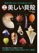 美しい貝殻