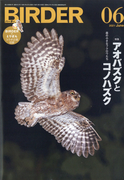 BIRDER (バーダー) 2021年 06月号 [雑誌]