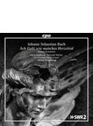 ダイアローグ・カンタータ集 ハナ・ブラシコヴァ、ドミニク・ヴェルナー、ベルナルディーニ&キルヒハイマー・バッハコンソート
