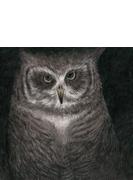 フクロウの声が聞こえる 【完全生産限定盤/7インチサイズ紙ジャケット仕様】