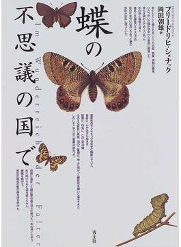 蝶の不思議の国で