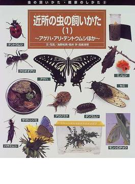 近所の虫の飼いかた 1 アゲハ・アリ・テントウムシほか