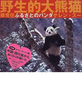 ふるさとのパンダ 野性的大熊猫
