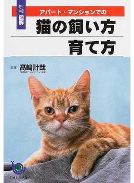 アパート・マンションでの猫の飼い方育て方
